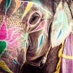 Voyage Inde : Éléphant Peinture