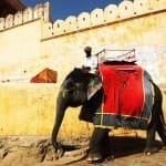 Voyage Inde Nord : Jaipur Rajasthan Fort Amber
