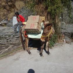 Cartons sur le dos de cheval