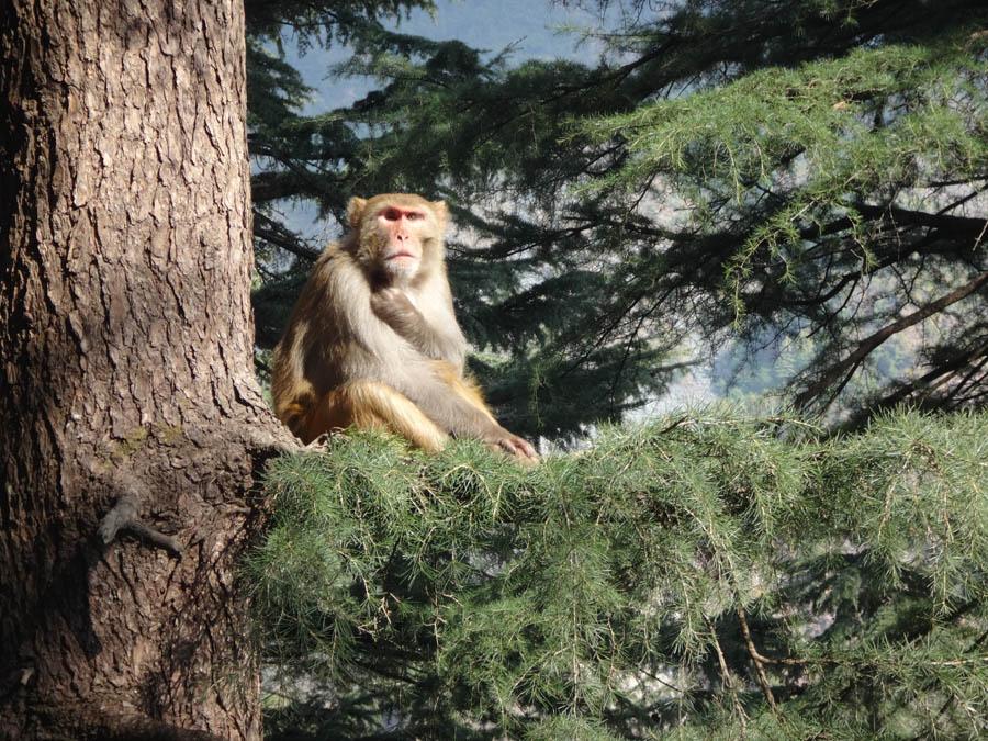 Singe sur un arbre