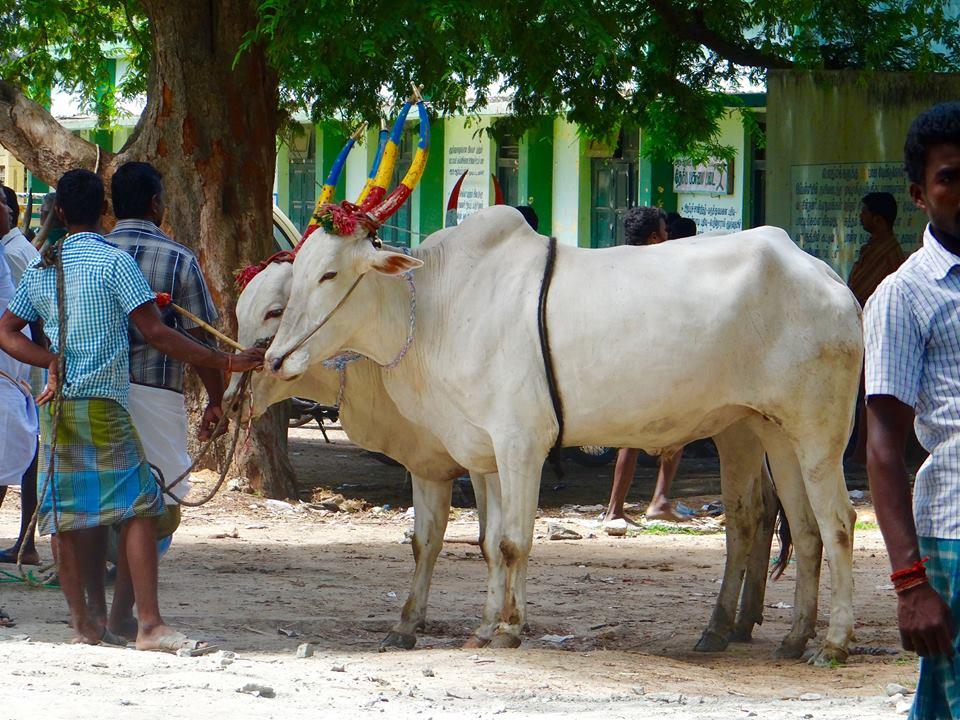 Voyage Inde : Tamil Nadu