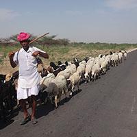 Voyage en Inde : Homme et chèvre route