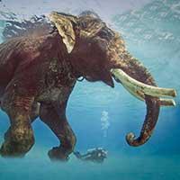 Voyage en Inde : Éléphant Îles Andaman