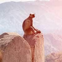 Voyage Inde Nord : Rajasthan Amber Fort