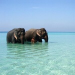 Travel South Indial : Andaman Islands Havelock