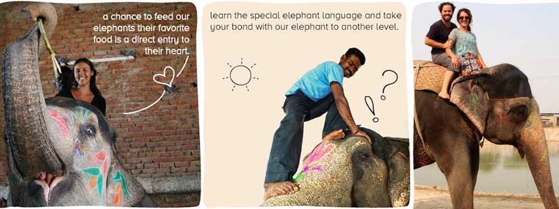 Voyage Inde : Elefantastic Jaipur