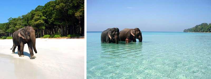 Voyage Inde : Iles Andaman Elephants