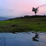 Inde Sud Voyage : Wayanad Kerala